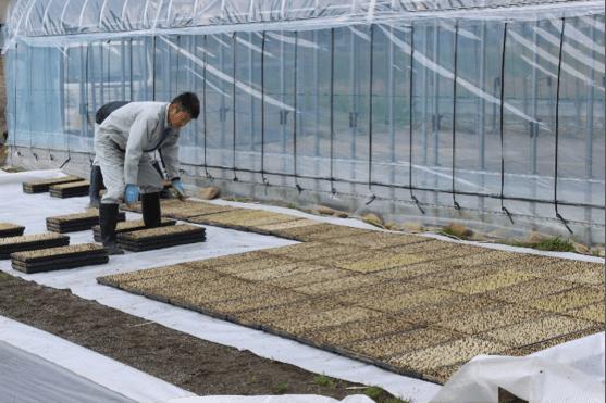 2020年4月21日「越淡麗」(酒造好適米)苗作り風景